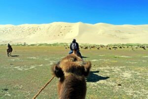 Camel Expedition